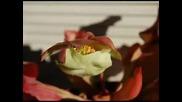 Armik Хищни цветя и растения