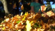 Beachfront B-roll Pile of Leaves Free to Use Hd Stock Video Footage