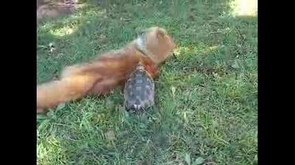 The Killer Tortoise