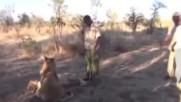 Лъвът просто кихна… вижте обаче реакцията на младежа, който го галеше през това време!