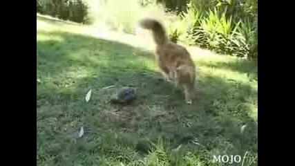 Котка Срещу Костенурка!кой Ще Победи?