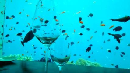 Подводен ресторант на Малдивите (Без багаж еп.234 трейлър).