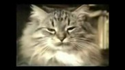 Смешни Котки (част 4)