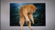 Откачен котешки дъбстеп ;д - Hovercat
