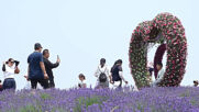 Chinese tourists flock to Hengxin Lavender Town as romantic sea of lavender blossoms