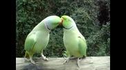 Папагалчета си говорят - много интересно !