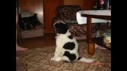 Готино Doggy ^_^