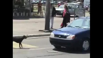 Никога не бибиткай на куче