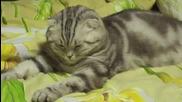 Пияна котка [ H D 720p ]