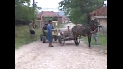 Село Опанец Плевенско Дърпане На Коне