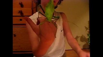 Не сте виждали такова насекомо преди !