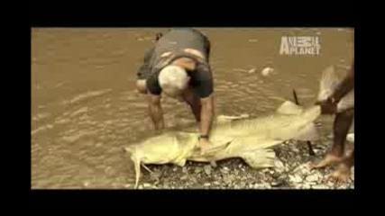 Рибар Хваща Голяма Риба !!!