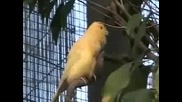 The Canary Aviary at the House that Contains Upwards of 50 Canaries