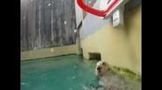 Морска видра играе баскетбол в зоопарк в Портланд