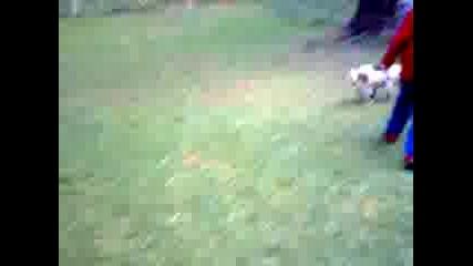 как се играе мач с куче (гледаите от далече) част 3