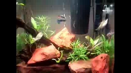aquarium 30l ribki