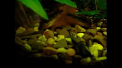 My home aquarium