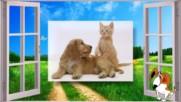 Котките и кучетата могат да бъдат приятели!