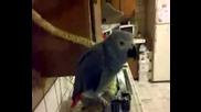 Папагал псува като хамалин - много смях