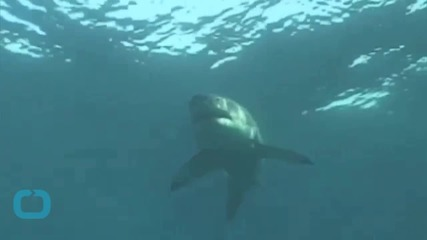 Filmmaker Comes Face-to-Face With Great White