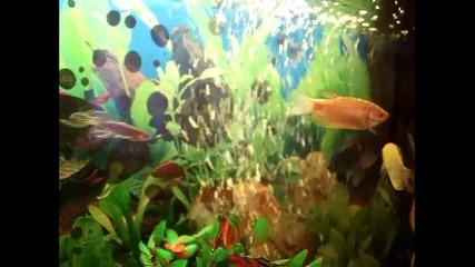 Страхотен аквариум