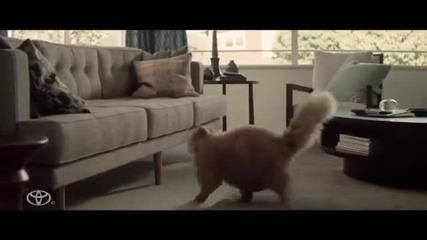 Смях - Котка иска да подкара Toyota