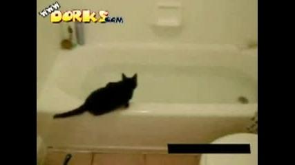 Много Смях ...котка В Банята :)))))