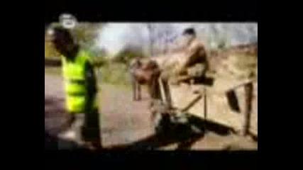 Аламинут Police