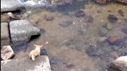 Умно куче си намира забавление! ; D