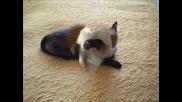 Сузка - Наи - Сладкото Котенце