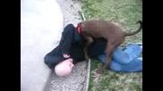 Куче vs. Своята Стопанка
