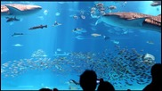 Неземно! Aquarium (okinawa Japan)
