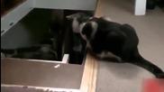 Котка прецаква друга котка - Смях !