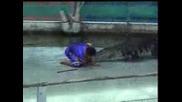 Крокодил хапе човек