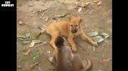 Маймунка и куче се боричкат :д Кеч федерация 2011 :д