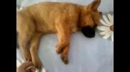 Сладко кученце ( сладко събуждане )