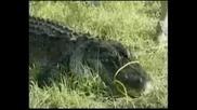 Алигатор отхапа ръката на дете