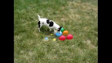 Куче срещу водни балони