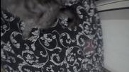 Котка vs Gopro - Бокс