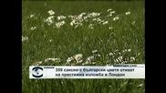 359 саксии с български цветя отиват на престижна изложба в Лондон