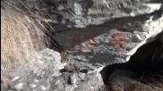 Ендуро до Райчова дупка