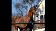най красивите животни - Конете
