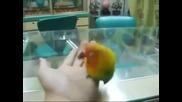 Папагал издава еротични звуци
