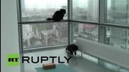 Русия: Шанс веднъж на 9 живота - котки превзеха офис на Световния ден на животните