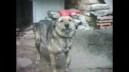 Доко - Моят Верен Приятел