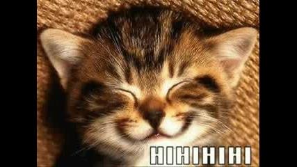 Много Смешни Картинки На Котенца
