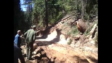 Holztransporter-steyr