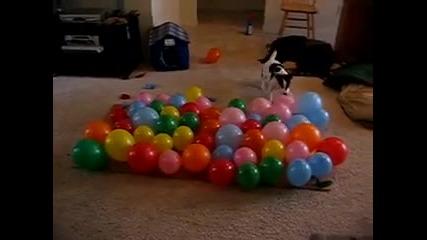 Много лудо куче ( смях )