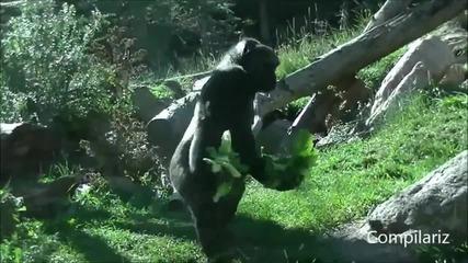 Животните се движат, като хората - Смях