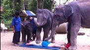 Тайландски слонове правят масаж